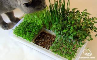 Микрозелень на подоконнике – новый тренд домашнего огорода