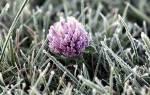 Защищаем декоративные растения от мороза
