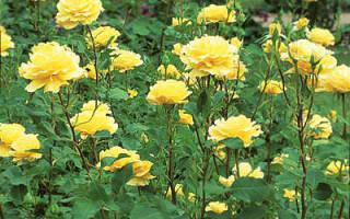 Цветы для букета: какие растения годятся на срезку?