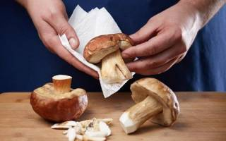Как правильно провести первичную обработку грибов?