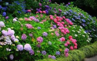 Как выбрать и купить хорошие саженцы декоративных растений для сада