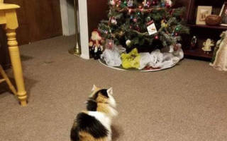 Спасти новогоднюю елку от кота – выполнима ли миссия