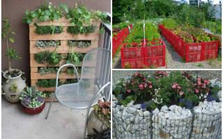 Декоративный огород: обустройство грядок и сада