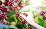 «Зеленое» кафе: чашечка кофе и горшочек с геранью