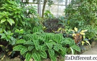 Растения и люди: сходства и различия