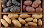 6 ошибок при хранении картофеля, или Почему картофель плохо хранится