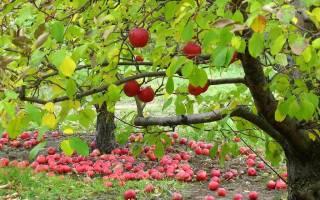 Осенняя подкормка сада — что, чем и когда