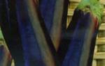 Ранние сорта баклажанов (описание с фото)