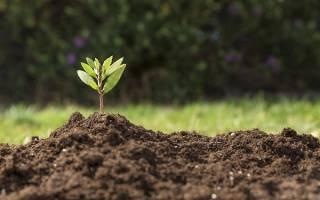 Как улучшить почву на участке