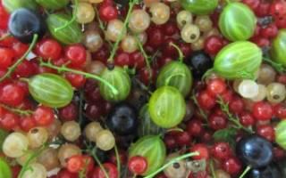 Заботимся о ягодных кустарниках и плодовых деревьях