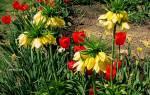 Календарь посадки луковичных и клубнелуковичных цветов