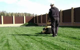Что делать с газоном весной (аэрация, подкормка, вычесывание)?