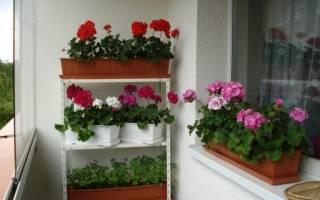 Как поступить с балконными растениями осенью