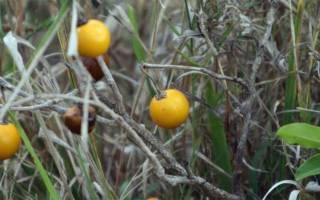Перцы и баклажаны: выбираем сорта с учетом климатической зоны