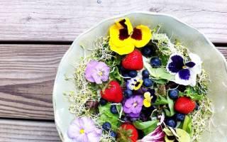 Засахаренные цветы – необычное украшение сладких блюд
