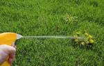 Все вредители газона и методы борьбы с ними
