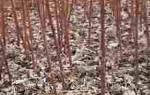 Осеннее мульчирование почвы в саду