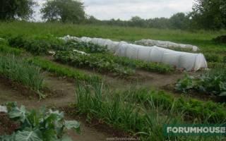 6 инновационных садовых новинок