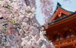 Баня офуро – отдых по-японски
