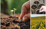 Семенам и почве – особое внимание