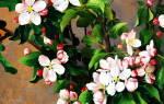 25 красивых цветочных картин для вдохновения