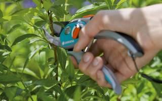 Когда и как производить обрезку декоративных кустарников
