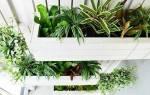 Вертикальные сады – выращиваем полезные растения