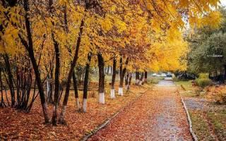Каким будет ноябрь 2019: долгосрочный прогноз погоды на весь месяц