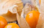 9 причин посадить физалис на дачном участке