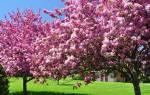 Табак для защиты растений – боремся с вредителями сада и огорода
