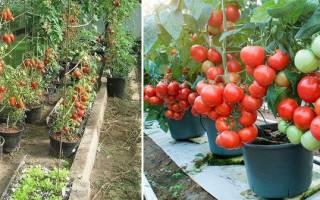 Выбираем емкости для посева и выращивания томатов