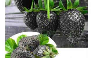 Как нас обманывают продавцы, или Растения, которых не существует в природе