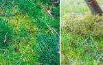 7 способов избавиться от мха на газоне