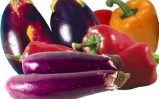 Урожай перца и баклажанов – когда собирать и как правильно хранить