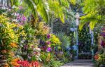 Шоу орхидей в Нью-Йорке: 14 изумительных фото