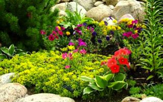 Какие цветы выбрать для альпийской горки?