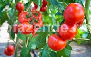 Чем подкормить помидоры, которые плохо растут