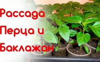 Выращивание рассады перца и баклажанов в 2019 году: Лунный календарь работ