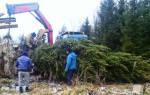 Деревья-крупномеры – правильная выкопка, посадка и уход