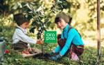 Как купить хорошие саженцы плодовых деревьев, чтобы долгие годы радоваться урожаю
