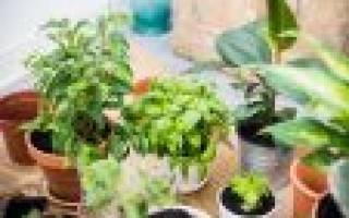 Горшок для простой пересадки растений