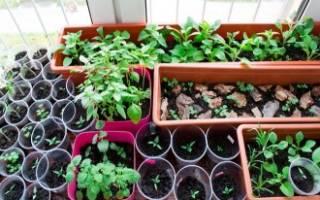 Все, что вам нужно для создания городского огорода