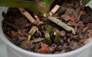 Во что посадить орхидею: выбираем грунт и емкость