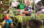 30 дел, которые нужно сделать в августе в саду, огороде и цветнике