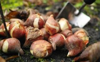 15 фантастически красивых луковичных, которые высаживают весной