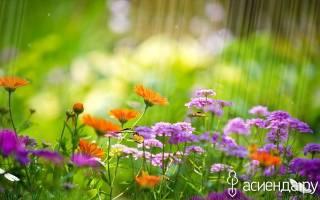Пора приступать к уходу за цветами