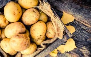 Голландский картофель: 5 наиболее урожайных сортов