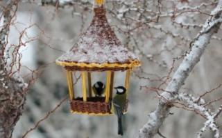 10 отличных способов украсить сад зимой