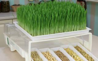 Выращиваем зелень