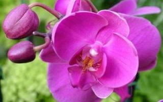В горшке «цветет» плесень, а не орхидея: как помочь растению